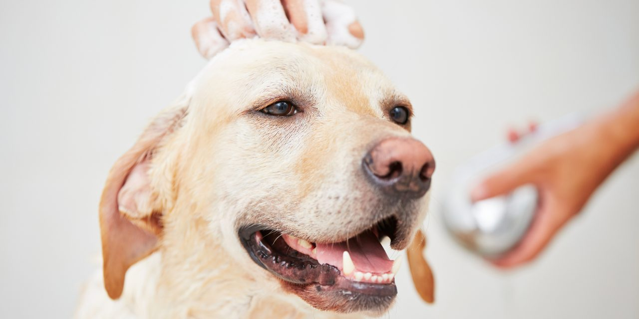 Top 10 Best Dog Shampoo of 2017